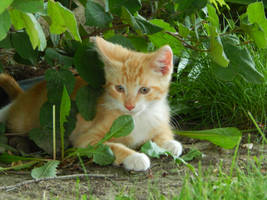 Kittens 2016.1 by MadGardens