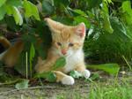 Kittens 2016.1