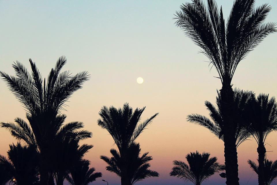 Palm trees by NozomiHoshi6