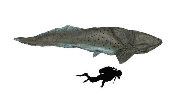 Heterosteus ingens Scale