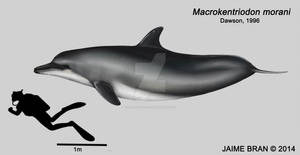 Macrokentriodon