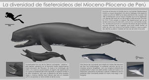 Diversity of physeteroids of Peru by Bran-Artworks