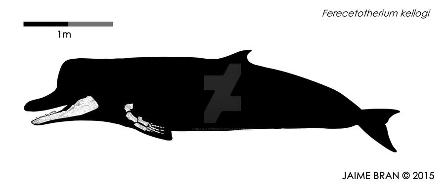 A really old and small sperm whale by Bran-Artworks