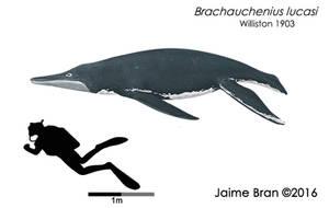 Brachauchenius lucasi by Bran-Artworks