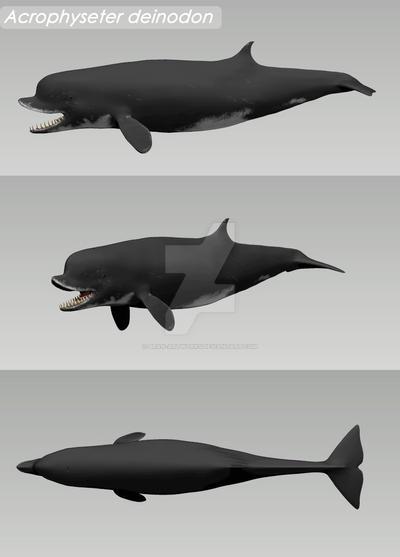 Acrophyseter deinodon 3d model by Bran-Artworks