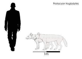 Protocyon troglodytes by Bran-Artworks