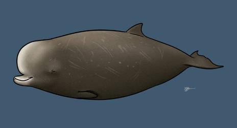Northern Bottlenose beaked whale