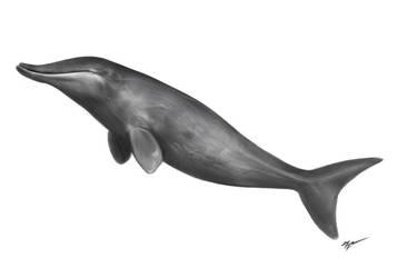 The No Dolphin