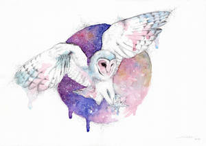 Owl and night new