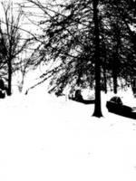 Snowy Day by Nekosxe