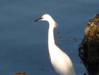 A crane by jasonito