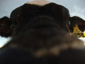 IsmaFiDi's Profile Picture