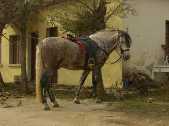 A horse by kos5tas