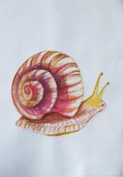 simply snail by alexiacortez