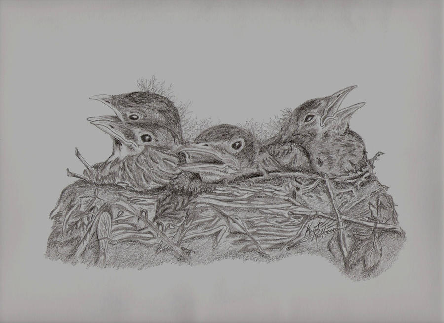 nest of baby birds sketch by cg41318 on DeviantArt