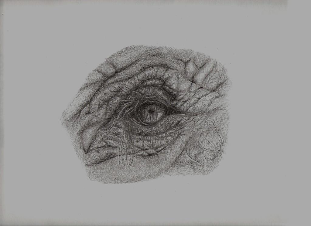 Elephant eye pencil sketch by cg41318 on DeviantArt