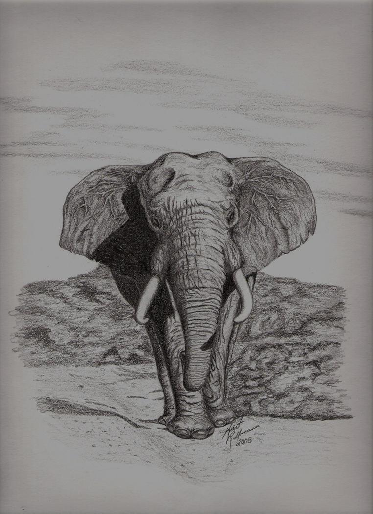 Pencil Drawings Of Elephants Tumblr Elephant pencil sketch...