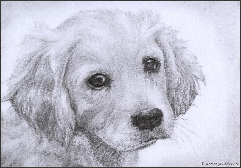 Golden Retriever Puppy by WiccanSoul on DeviantArt