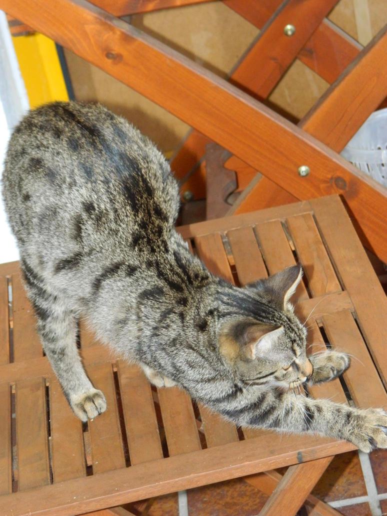 stretching by Aisha-sama666