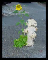 Cement Sunflower by stephie