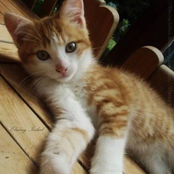 Little Cat by Elwing-Isiliel