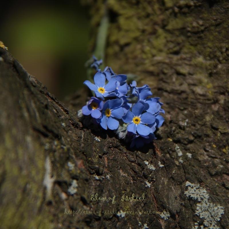 Little blue in the tree