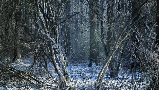 Wandering around the woods