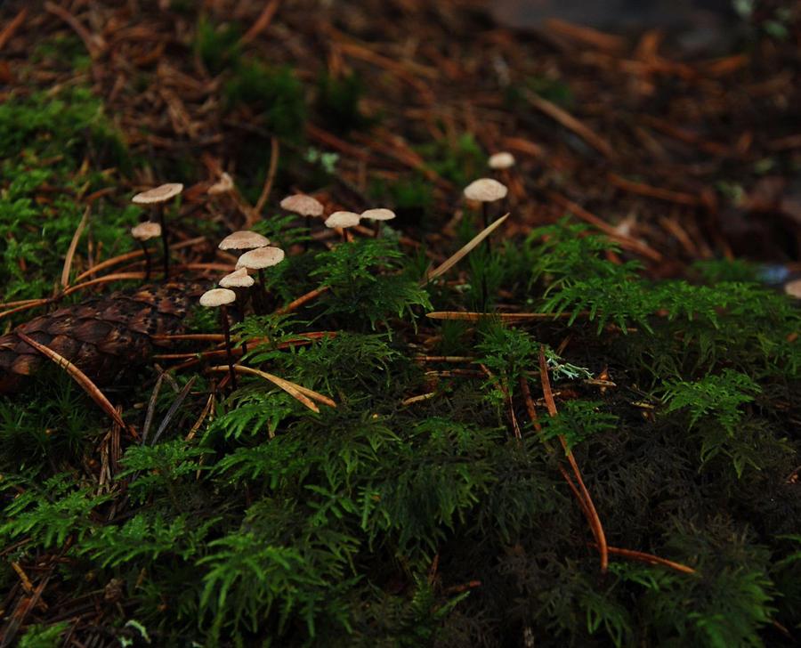 Mini Mushrooms by hoshitsu