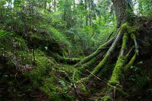 mysterious forest by skubaNiec