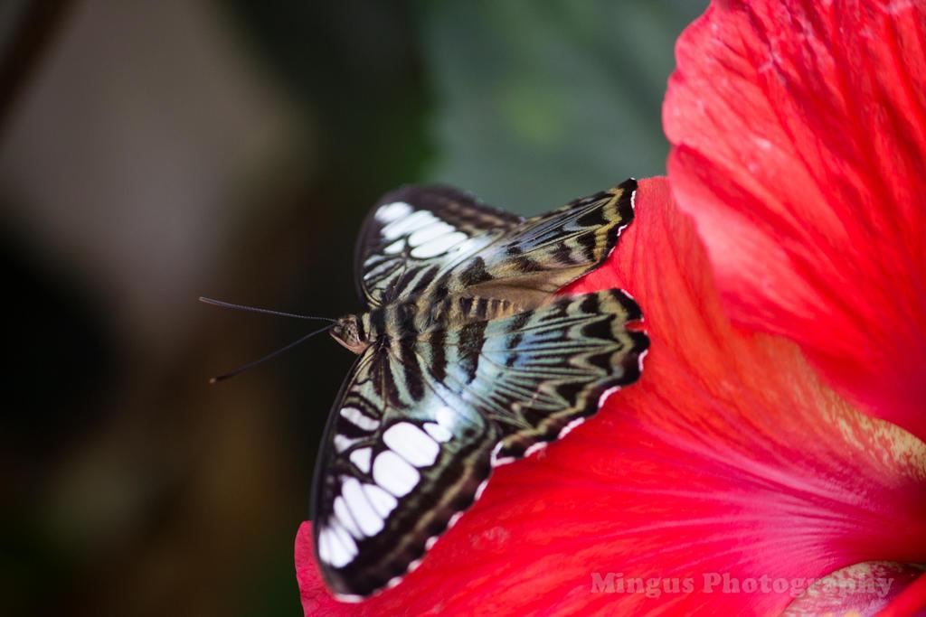 Butterfly 3 by justarus