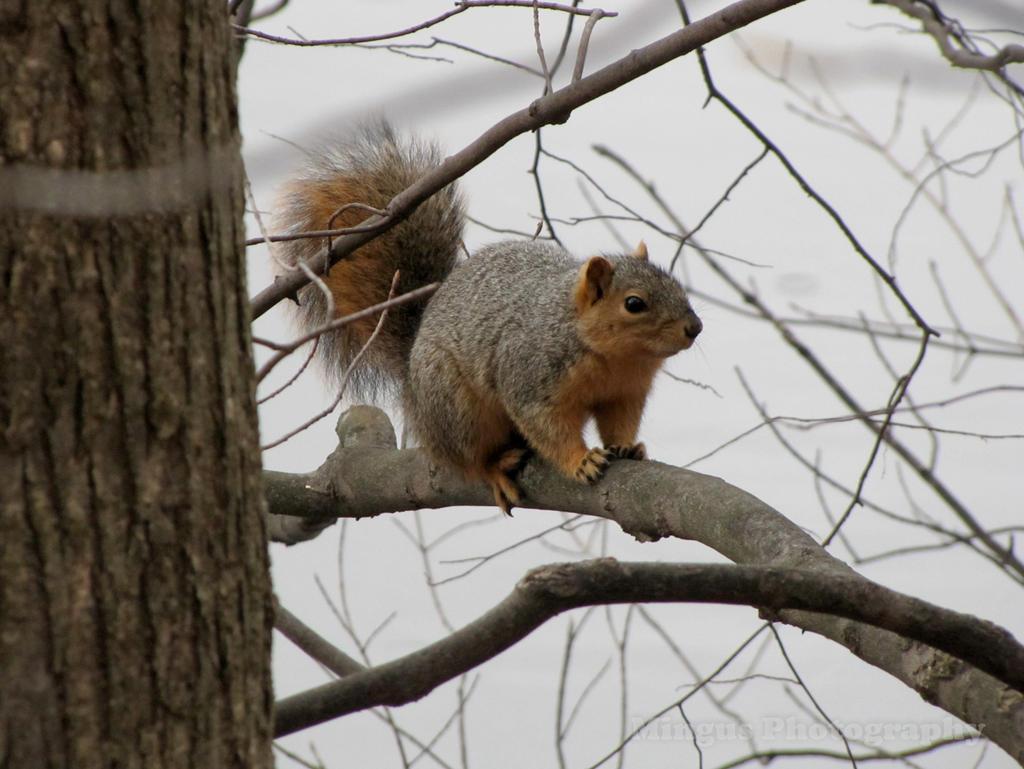 Squirrel by justarus