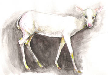 White Deer by Hatzilla