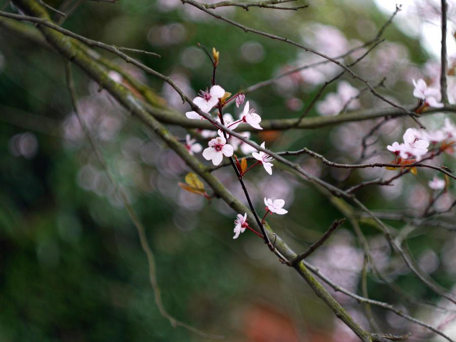 Happy New Spring by vesssper
