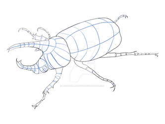 Rhino Beetle Perspective