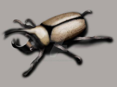 Rhino Beetle Color