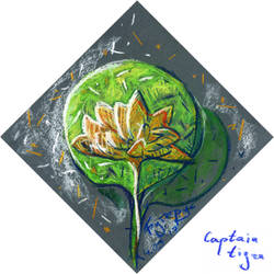 (17.03.04)Water Lily by CaptainTigra