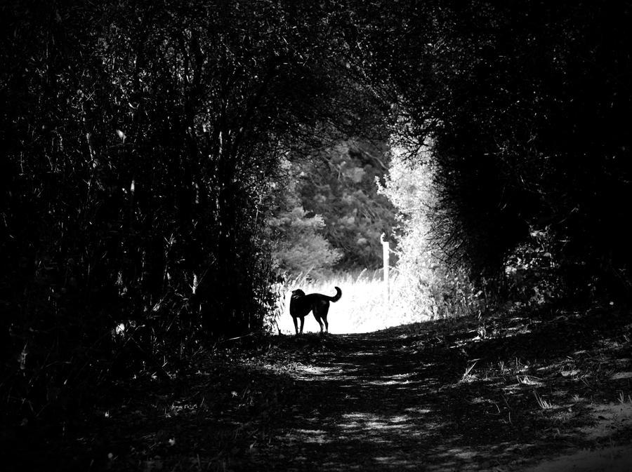 Shadowland by SchuberttrebuhcS