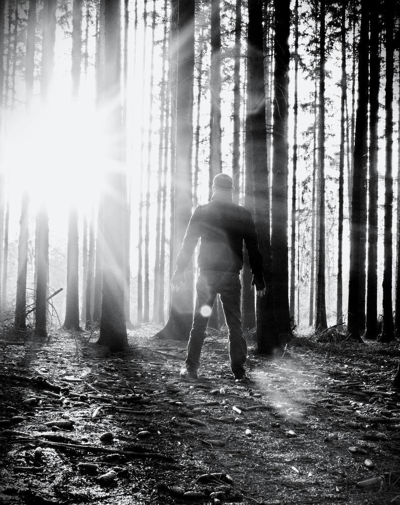 Light by SchuberttrebuhcS