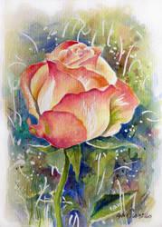 rose 2 by annalobello