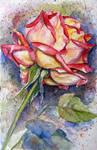 rose 12 by annalobello