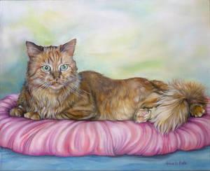 ritratto di gatto - cat portrait