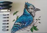 Blue Jay by Ki-Re