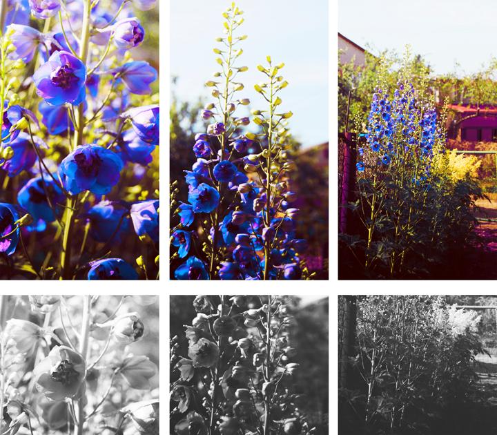 blue. by SkullHeart