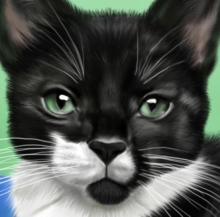 Nemi the Kitty closeup by Izilja