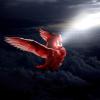 birdy by oliecannoligriffard