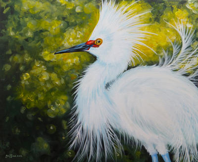 Snowy egret by oliecannoligriffard
