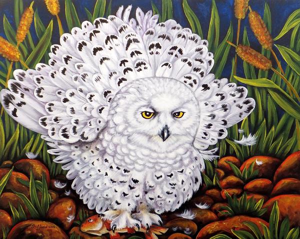 Snowy owl splendor by oliecannoligriffard