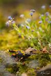 Fire salamander by michalfrgelec