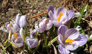 Spring Flowers by jkund