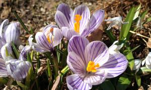 Spring Flowers 2 by jkund
